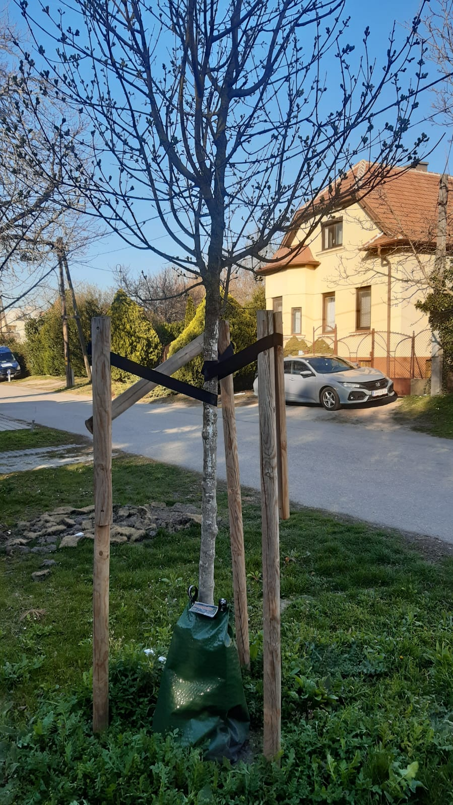 Baumpflege Ebreichsdorf