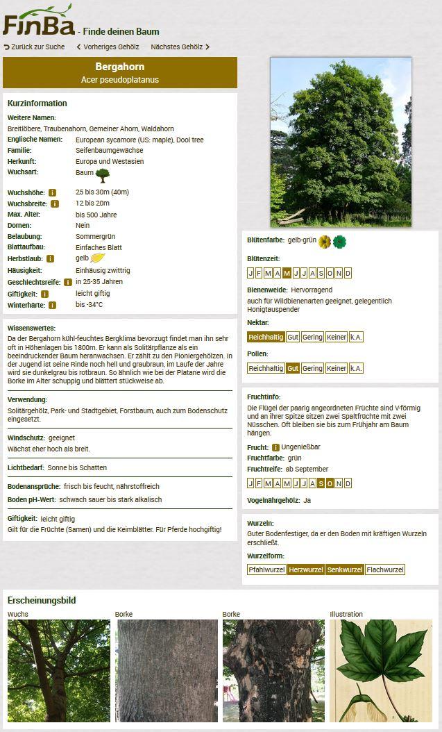 Screenshot Bergahorn