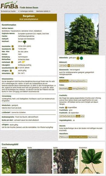 Screenshot FinBa Bergahorn