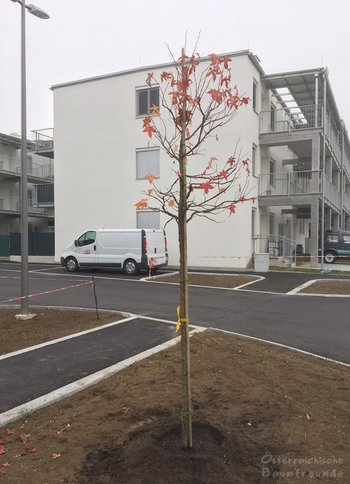 Platzgestaltung Winzergasse