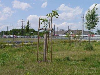 Trompetenbaum Bahnunterführung