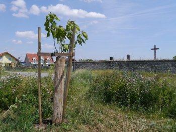 Trompetenbaum Winzergasse Ecke Rebstockgasse