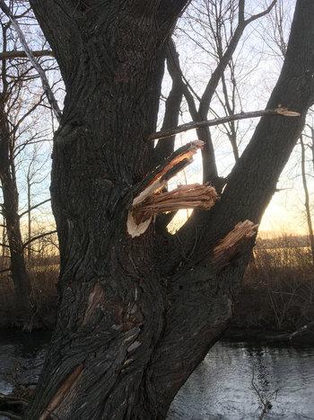 Baumschnitt Fischa