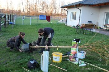 Baumpflanzung Pferde Stärken