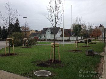 Volksschule Baumpflanzung