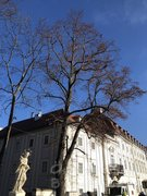 Baum nachher - ohne Misteln