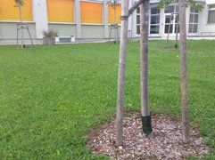 Stammfußschutz bei Volksschule