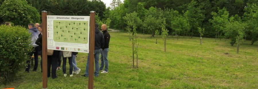 Öffentlicher Obstgarten in Gramatneusiedl