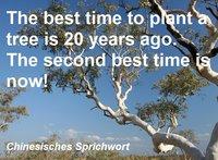 Eukalyptusbaum mit Sinnspruch